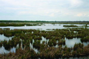 Salt marshes undergo periodic flooding being subjected to the carbonate chemistry of the water column twice per day. Predicted CO2 rising will change this carbonate chemistry and thus affect differentially C3 and C4 halophytes.