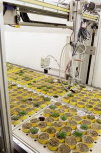 Automated phenotyping of Arabidopsis thaliana genotypes on the PHENOPSIS platform. Photo credit: B Blonder.