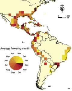 Average flowering month of Spanish moss