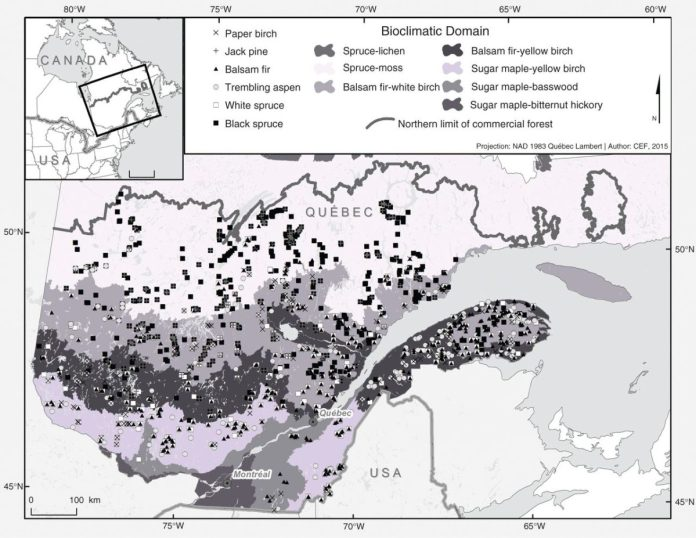 Site locations in a tree growth survey