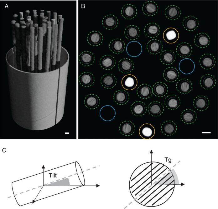 3-D rendering of the sample holder volume containing the tree cores