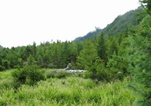 Salvia nubicola growing along a broad altitudinal range in Himalayas (photo taken by Tomáš Dostálek).