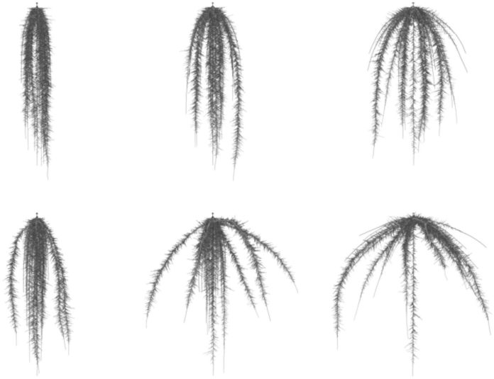 Simulated maize root system with different branching angles