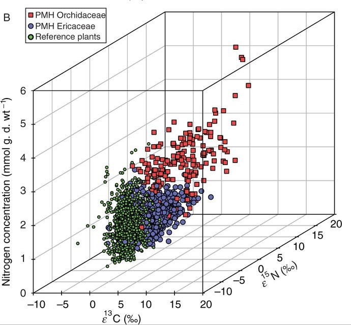 Single values for enrichment factors ε<sup>13</sup>C and ε<sup>15</sup>N and nitrogen concentrations (mmol g d. wt<sup>−1</sup>) of partially mycoheterotrophic (PMH) Orchidaceaeand Ericaceae associated with fungi forming ectomycorrhizas and the respective photosynthetic reference plants (REF, n = 1191).