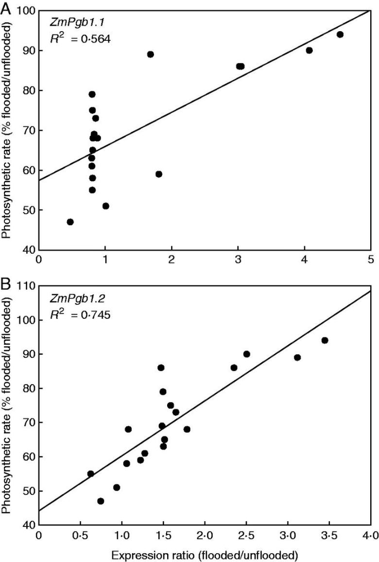 Correlation between the expression ratio (flooded/unflooded) of ZmPgb1.1 and ZmPgb1.2 in relation to the ability of the genotypes to retain photosynthetic rates after 10 d of flooding.