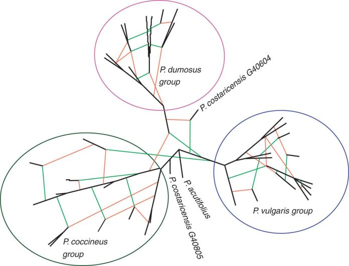 Hybridization network showing the hypothetical reticulation events among Phaseolus species.