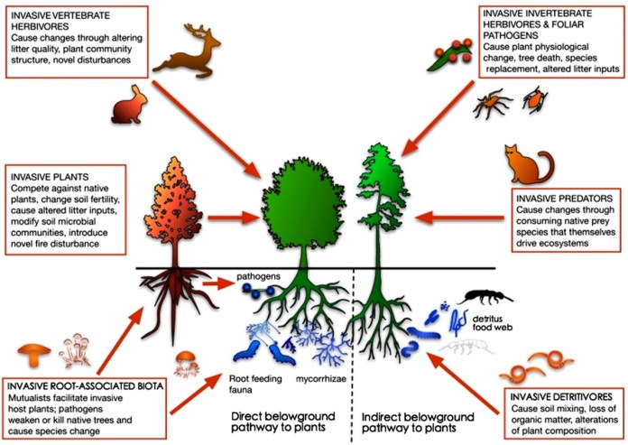 Aboveground and belowground biota are linked in forest ecosystem