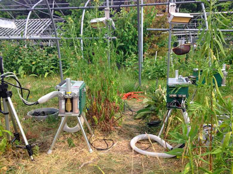 Leaf gas exchange measurements being performed at the Boston Area Climate Experiment (BACE).