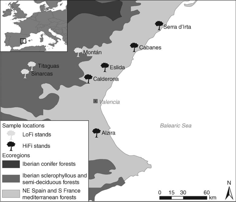 Study stands of Pinus halepensis in the Eastern Iberian Peninsula belong to different ecoregions.