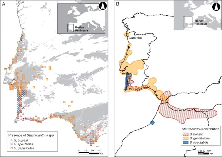 Geographical range of Stauracanthus species in the Iberian Peninsula