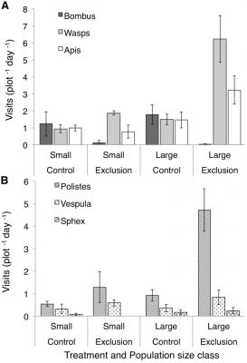 Rate of pollinator visitation to Asclepias verticillata flowers in control and bumble bee exclusion plots, and in either small or large populations of A. verticillata