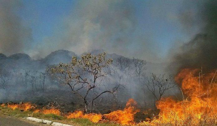 Savanna fire, an increasingly rare sight in parts of the Cerrado.