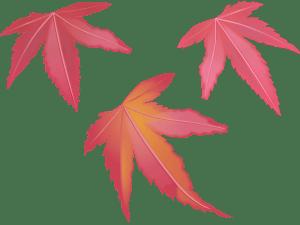 redleaves,もみじ,紅葉