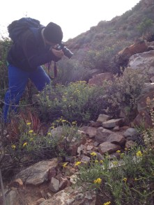Supervisor appreciation: Timm taking photos of some asteraceous shrub or another