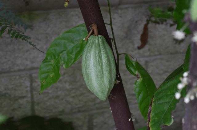 Micoze - Leacuri din plante