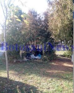 boschetari parcul curcubeului4