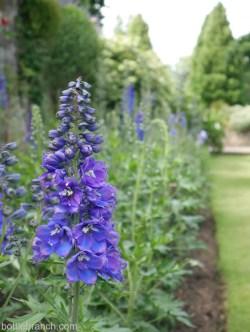 falkland house garden scotland