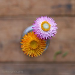 two-straw-flowers-bottle-branch-blog