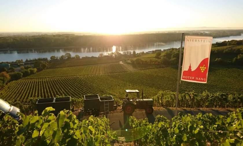 Weinlage Hipping in Nierstein im Herbst