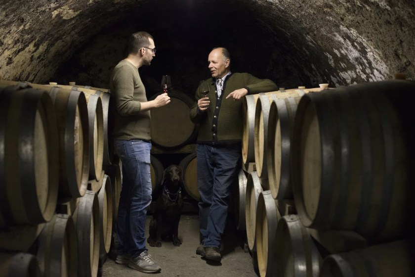 Hans und Johannes Pitnauer im Weinkeller mit einem Glas Zweigelt in der Hand
