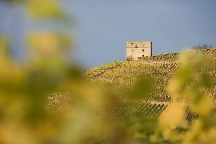 Blick in den Weingarten vom Weingut Beurer