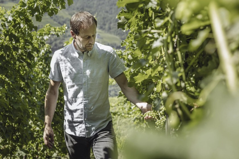 Winzer Hayo Loacker kontrolliert die Traubenqualität im Weinberg