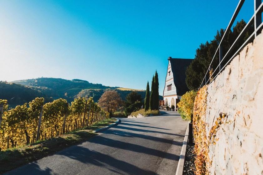 Weinberge säumen die Straße zum Gut Hermannsberg