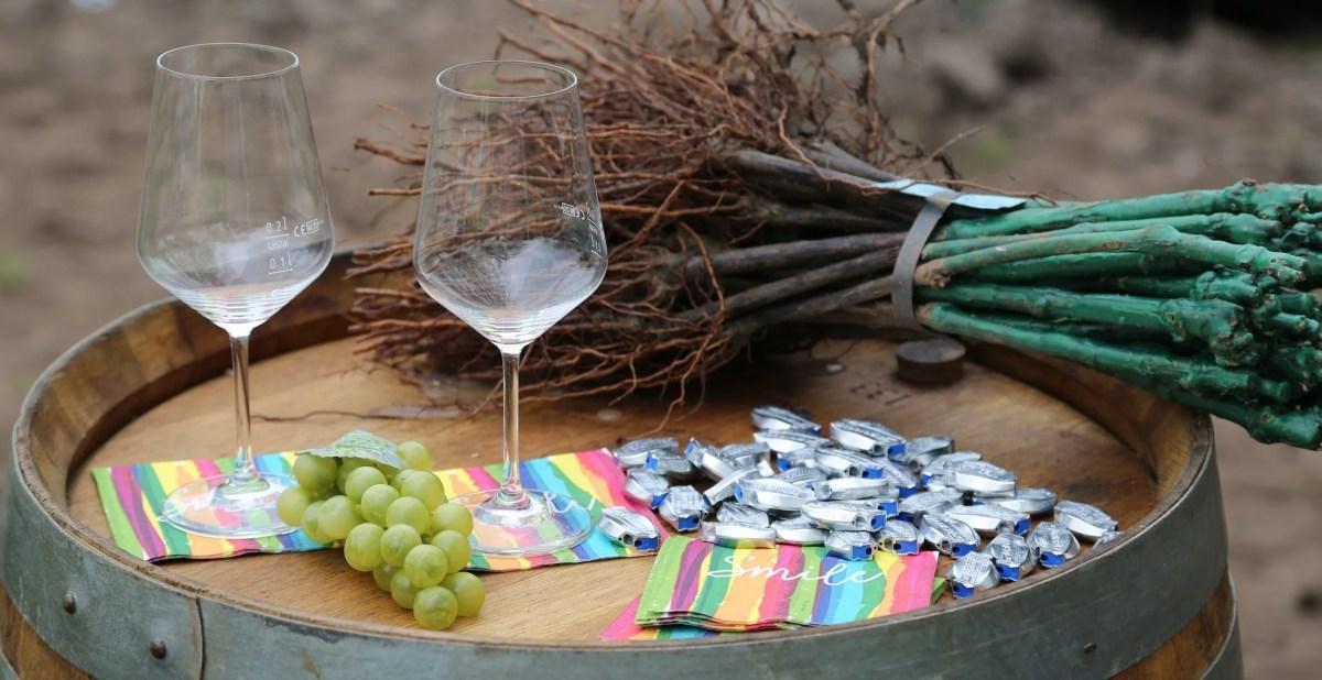 Erste Ostfriesische Winzergenossenschaft eröffnet Weinberg