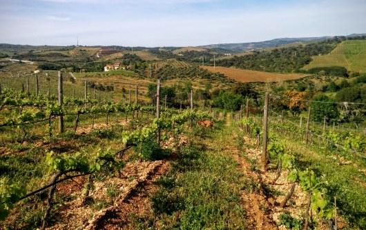 Romeu vineyard Rossi