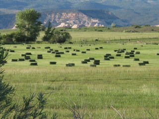 The green fields of Boulder.