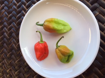 scorpion-peppers