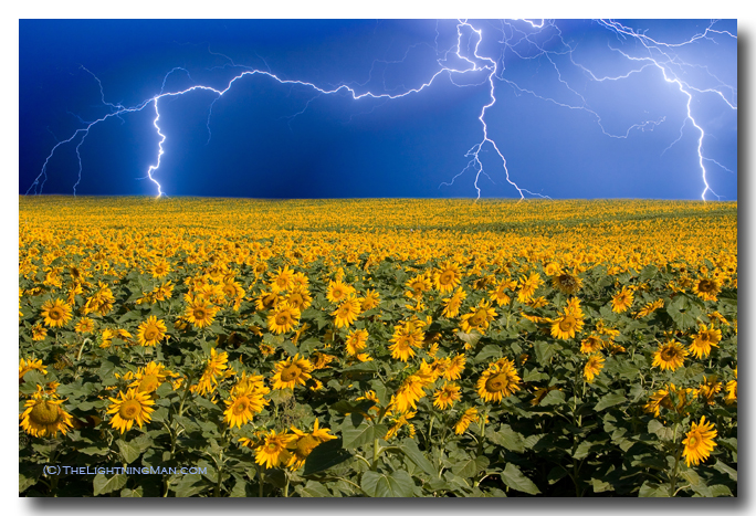 Thunderstorm on the sunflower horizon