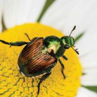 Bugs-B-Gone: A guide to natural pest control