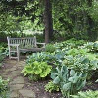 Hostas are a shoo-in for shady areas