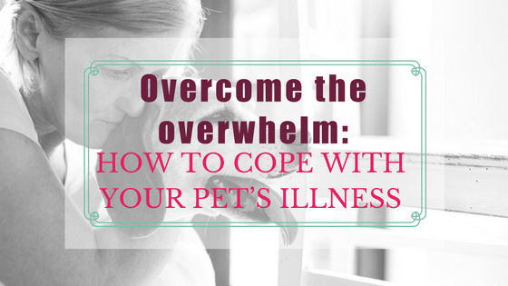 Overcome the Overwhelm: How to Cope with your Pet's Illness.