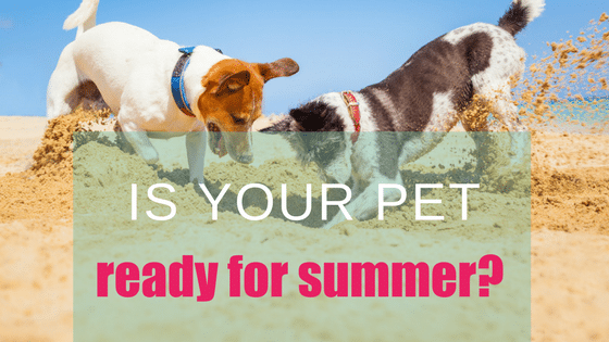 Four Tips To Get Your Pet Summer Ready