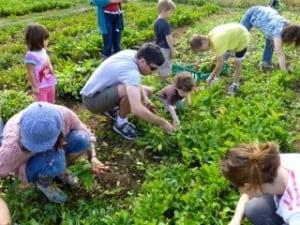 Families help plant at Ekar Farms last year.