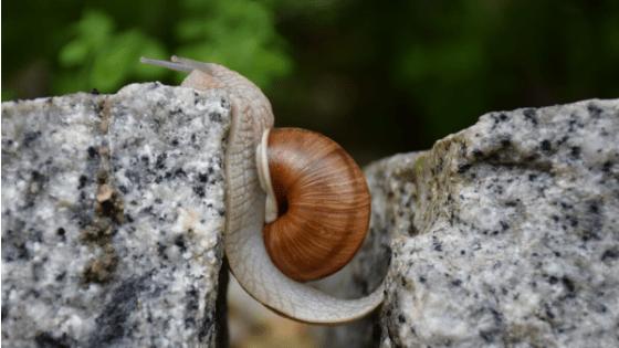 l'echec est le début de la réussite escargot persévère