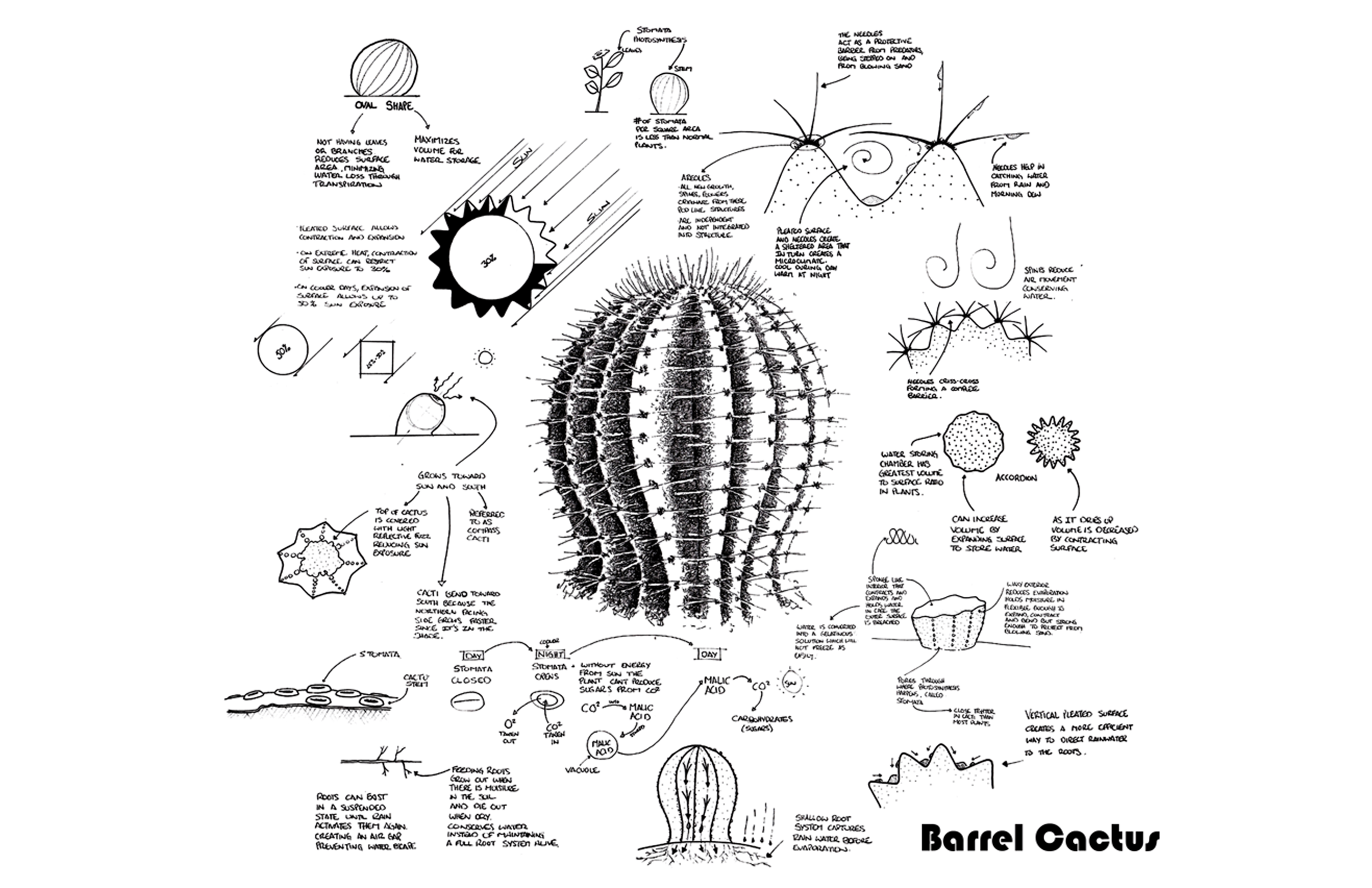Architecture Inspired By Barrel Cactus