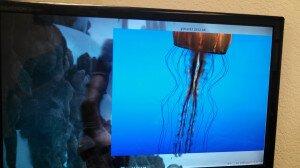 Sintel-and-Jellyfish