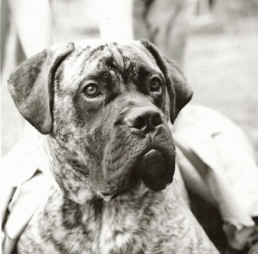 Lanhams' dog in the 1950s, which the children used to ride like a pony.