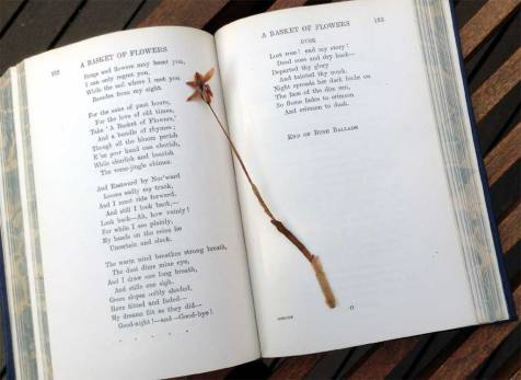 The Poems of Adam Lindsay Gordon, the prize for 1940, including a blue orchid pressed in the book at the time.