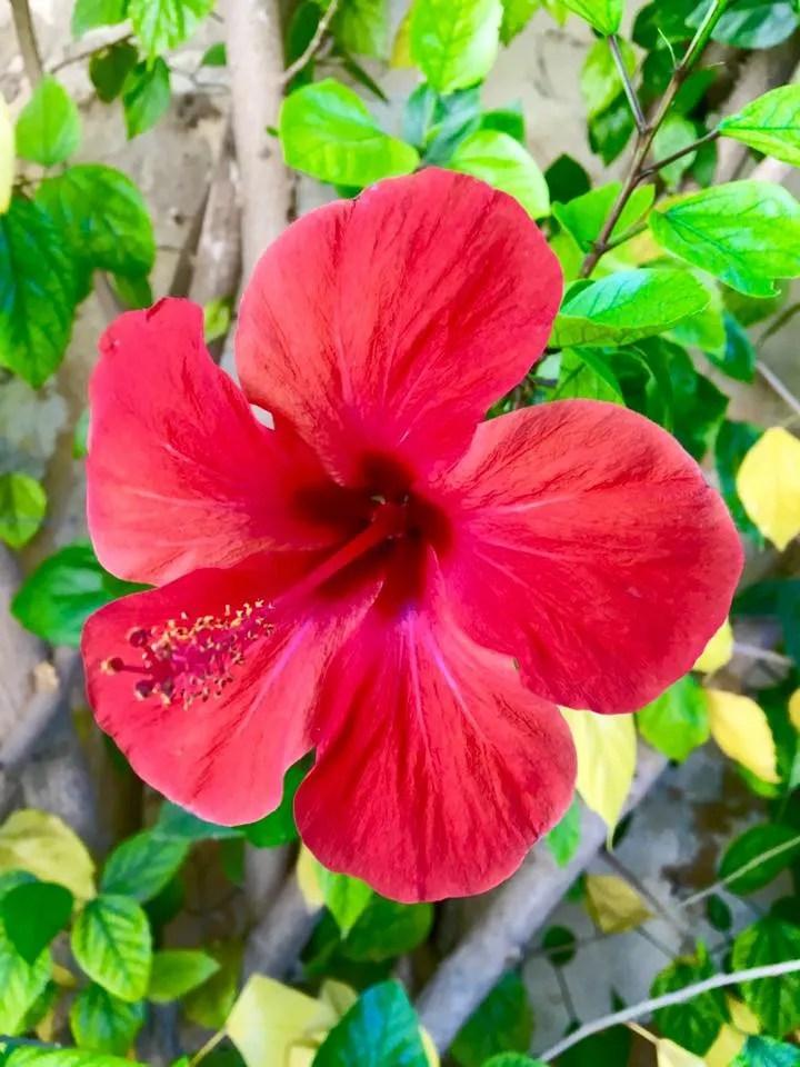 Flower in Spain