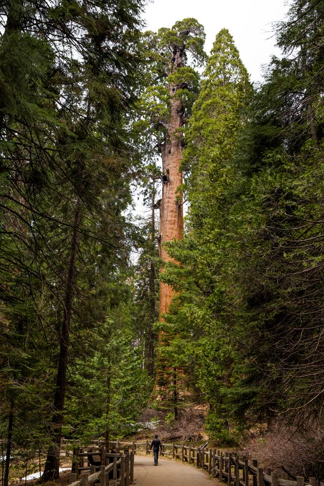 Sequoia-National-Park-Brian-Tree-Walk