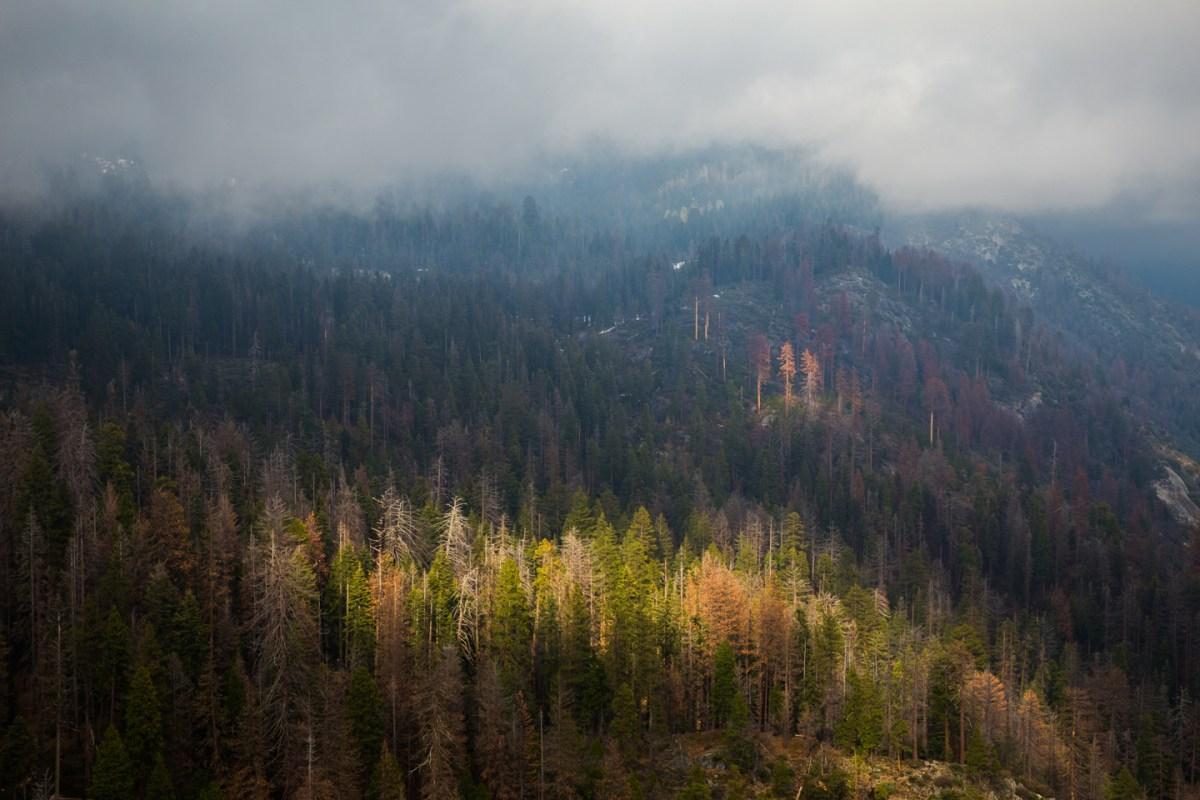 Sequoia-National-Park-Morro-Rock-View-Fog