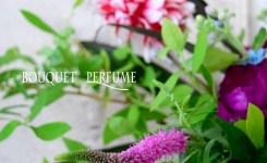 トラノオ ピンクの花 夏の花 野草