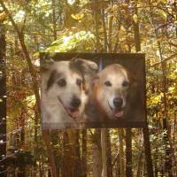 Dogs banner fall