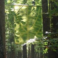 Green leaf in summer