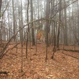 Cezanne Banner in Fog