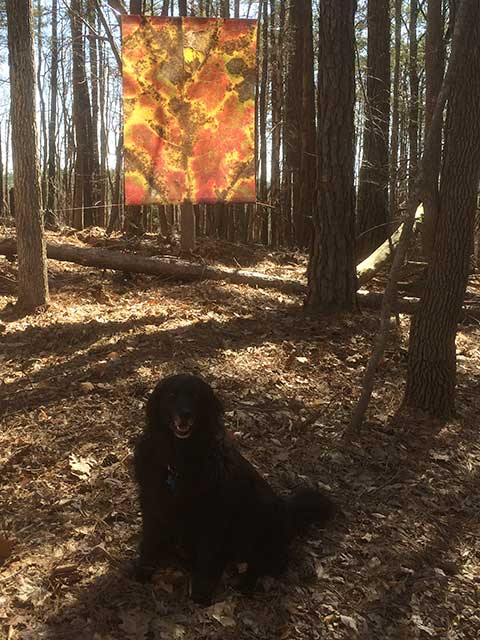 Maggie with Leaves after Masson banner